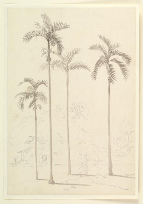 Drawing of a Date Palm. WD2019 © British Library Board 2014