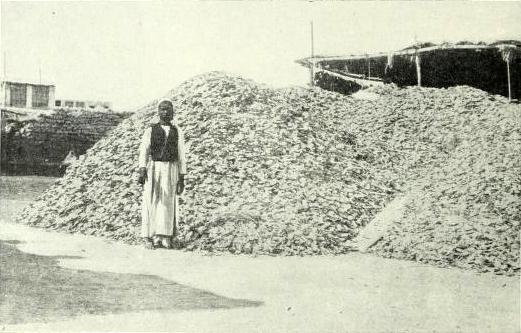 صدف المحار خارج مكتب وونكهاوس وشركاه في البحرين، حوالي سنة ١٩١٤. من: تاريخ الحرب في التايمز، ١٩١٤، مجلد رقم ٣، ص. ٩٤ (المصدر: تاريخ الحرب في التايمز، ١٩١٤،  مجلد رقم ٣، ص. ٩٤)